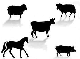 Livestock MOBILE VERSION